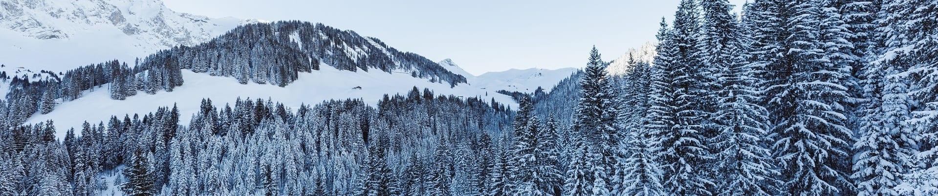 Verschneite Tannen in der Winterlandschaft Adelboden Silleren
